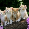 Download curious kittens wallpapers, curious kittens wallpapers Free Wallpaper download for Desktop, PC, Laptop. curious kittens wallpapers HD Wallpapers, High Definition Quality Wallpapers of curious kittens wallpapers.