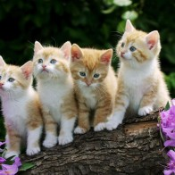 Curious Kittens Wallpapers