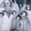 Download cute arctic penguins wallpapers, cute arctic penguins wallpapers Free Wallpaper download for Desktop, PC, Laptop. cute arctic penguins wallpapers HD Wallpapers, High Definition Quality Wallpapers of cute arctic penguins wallpapers.