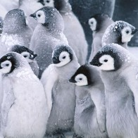 Cute Arctic Penguins Wallpapers