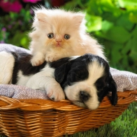 Cute Basket Buddies Wallpapers