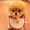 Download cute dog christmas wallpapers, cute dog christmas wallpapers Free Wallpaper download for Desktop, PC, Laptop. cute dog christmas wallpapers HD Wallpapers, High Definition Quality Wallpapers of cute dog christmas wallpapers.