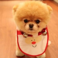 Cute Dog Christmas Wallpapers