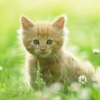 Download cute kitten wallpapers, cute kitten wallpapers Free Wallpaper download for Desktop, PC, Laptop. cute kitten wallpapers HD Wallpapers, High Definition Quality Wallpapers of cute kitten wallpapers.