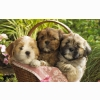 Cute Puppies 2 Wallpapers