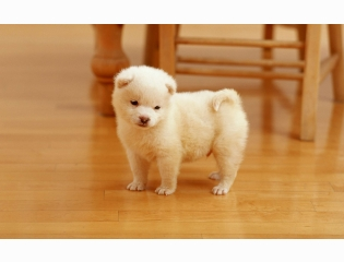 Cutest Puppy Wallpapers