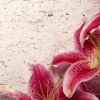 Download decor lily, decor lily  Wallpaper download for Desktop, PC, Laptop. decor lily HD Wallpapers, High Definition Quality Wallpapers of decor lily.