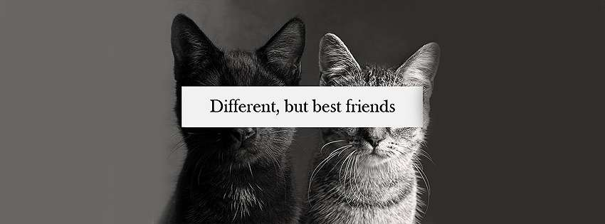 Different But Best Friends Cover