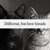 Download different but best friends cover, different but best friends cover  Wallpaper download for Desktop, PC, Laptop. different but best friends cover HD Wallpapers, High Definition Quality Wallpapers of different but best friends cover.