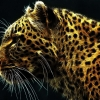 Download digital leopard wallpapers, digital leopard wallpapers Free Wallpaper download for Desktop, PC, Laptop. digital leopard wallpapers HD Wallpapers, High Definition Quality Wallpapers of digital leopard wallpapers.