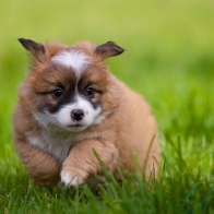 Dog 6 Hd Wallpapers