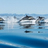 Download dolphins in sea wallpapers, dolphins in sea wallpapers Free Wallpaper download for Desktop, PC, Laptop. dolphins in sea wallpapers HD Wallpapers, High Definition Quality Wallpapers of dolphins in sea wallpapers.