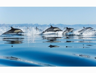 Dolphins In Sea Wallpapers