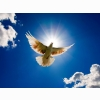 Dove Bird From Sky Wallpapers