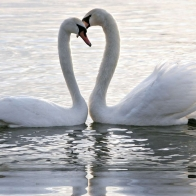 Download Romantic Birds Couples Hd Wallpapers