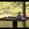Download duck on bird table hd wallpapers, duck on bird table hd wallpapers Free Wallpaper download for Desktop, PC, Laptop. duck on bird table hd wallpapers HD Wallpapers, High Definition Quality Wallpapers of duck on bird table hd wallpapers.