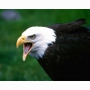 Eagle 8 Hd Wallpapers
