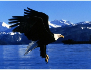 Easy Landing Alaska Wallpapers