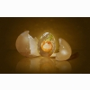 Egg Shell Shaped Light