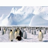 Emperor Penguins Antarctica Wallpapers