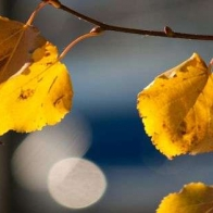 Facebook Timeline Cover Photo 1158