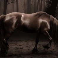 Facebook Timeline Cover Photo 673