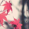 Download fall leafs cover, fall leafs cover  Wallpaper download for Desktop, PC, Laptop. fall leafs cover HD Wallpapers, High Definition Quality Wallpapers of fall leafs cover.