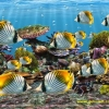 fish hd wallpaper 16,nature landscape Wallpapers, nature landscape Wallpaper for Desktop, PC, Laptop. nature landscape Wallpapers HD Wallpapers, High Definition Quality Wallpapers of nature landscape Wallpapers.