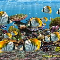 Fish Hd Wallpaper 16
