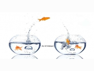 Fish Hd Wallpaper 1