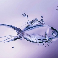 Fish Hd Wallpaper 20