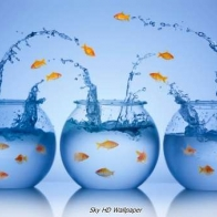 Fish Hd Wallpaper 22