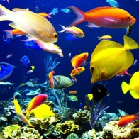 Fish Hd Wallpaper 3