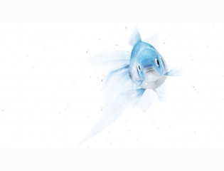 Fish Hd Wallpaper 43