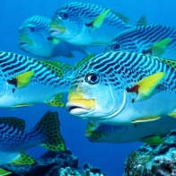 Fish Hd Wallpaper 45
