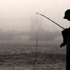 Download fishing cover, fishing cover  Wallpaper download for Desktop, PC, Laptop. fishing cover HD Wallpapers, High Definition Quality Wallpapers of fishing cover.