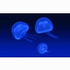 Floating Jellyfish Wallpapers