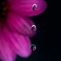 Flowers In Drops