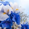 flowers wallpaper hd 114 flowers High Resolution Desktop Wallpapers For Widescreen, Fullscreen, High Definition, Dual Monitors, Mobile and Tablet