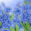 flowers wallpaper hd 167 flowers High Resolution Desktop Wallpapers For Widescreen, Fullscreen, High Definition, Dual Monitors, Mobile and Tablet