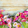 flowers wallpaper hd 218 flowers High Resolution Desktop Wallpapers For Widescreen, Fullscreen, High Definition, Dual Monitors, Mobile and Tablet