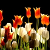 flowers wallpaper hd 65 flowers High Resolution Desktop Wallpapers For Widescreen, Fullscreen, High Definition, Dual Monitors, Mobile and Tablet
