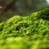 forest springtime,nature landscape Wallpapers, nature landscape Wallpaper for Desktop, PC, Laptop. nature landscape Wallpapers HD Wallpapers, High Definition Quality Wallpapers of nature landscape Wallpapers.