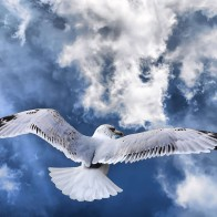 Fotogenova Bird Widescreen Wallpapers
