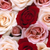 Fragrant Roses Hd Wallpapers
