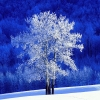 Download frosted aspen tree wallpapers, frosted aspen tree wallpapers Free Wallpaper download for Desktop, PC, Laptop. frosted aspen tree wallpapers HD Wallpapers, High Definition Quality Wallpapers of frosted aspen tree wallpapers.