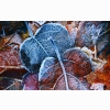 Frosty Autumn Leaves Wallpapers