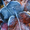 frosty autumn leaves,nature landscape Wallpapers, nature landscape Wallpaper for Desktop, PC, Laptop. nature landscape Wallpapers HD Wallpapers, High Definition Quality Wallpapers of nature landscape Wallpapers.