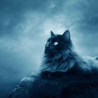 Full Moon Cat Wallpapers