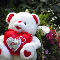Funadress Teddy Bear Hd Wallpapers 15